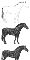 Warmblood Stallion Greyscale