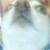 Nosey Dog Icon by jobelthegreatest