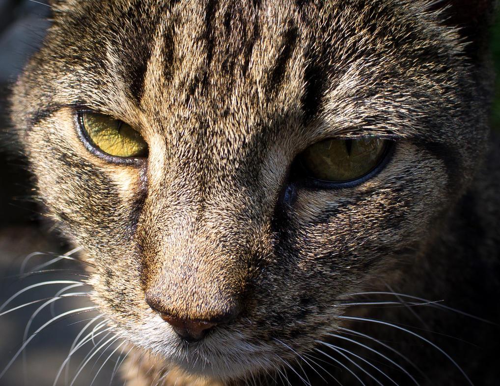 Mad Cat Downloads Aren T Working