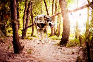 Forestwolf by hervastdreams
