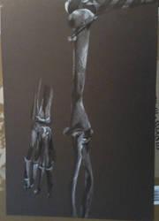 Bones by maiziedog