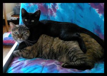 Stacking Cats by maiziedog