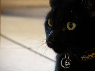 Handsome Kitty