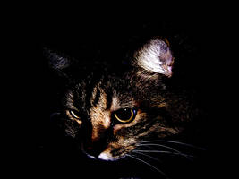Midnight Eyes by maiziedog