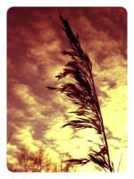 ... in sky 3 by TakPoprostuu