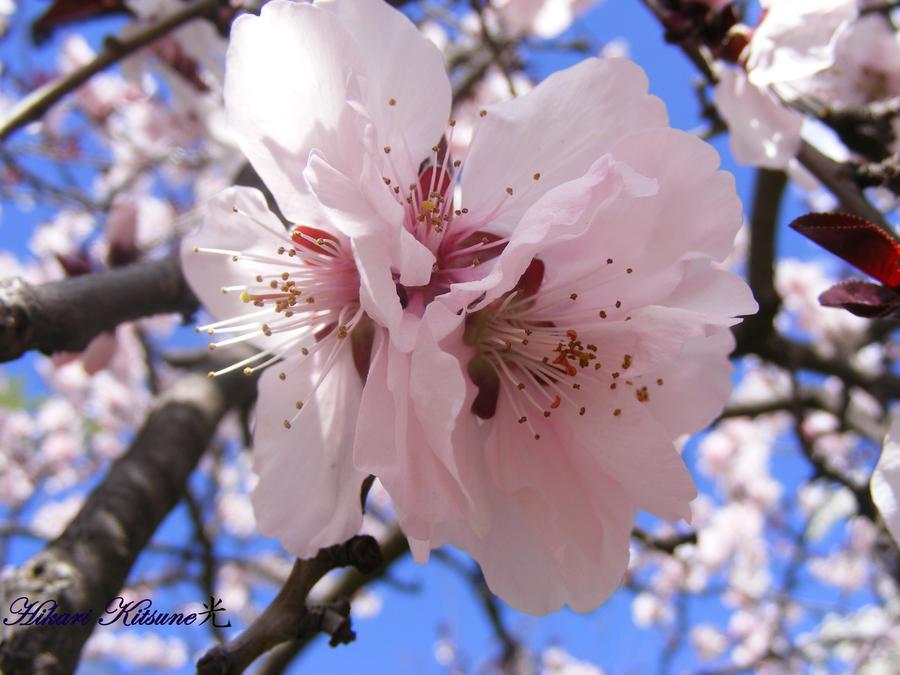 Pink flower by ElvishShadowArcher