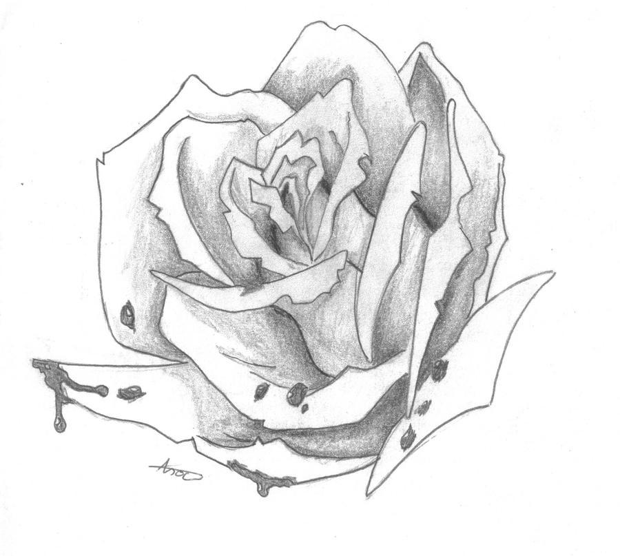 Bloody Rose Drawing By ElvishShadowArcher On DeviantArt