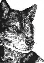 Wolf #1 by Takara45667