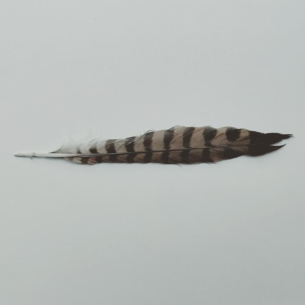 Feather by FutureMillennium