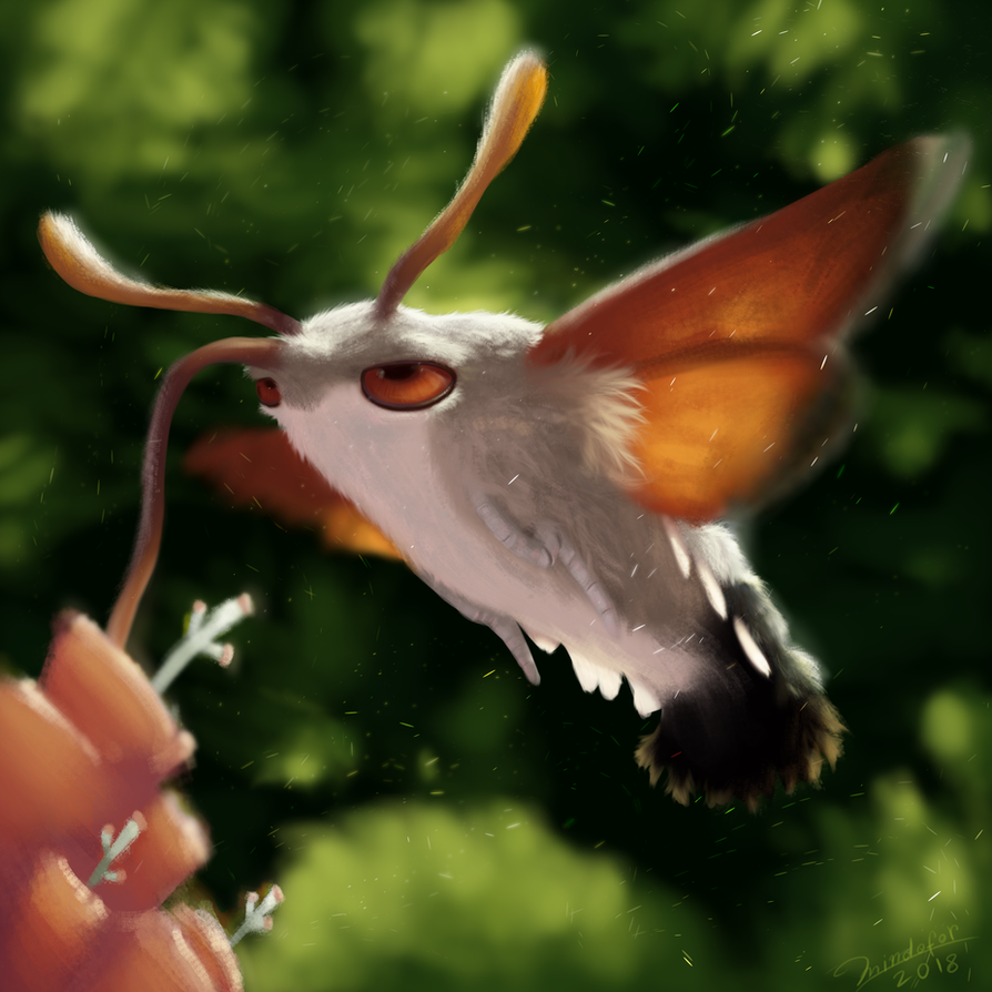 bored moth by Mindofor