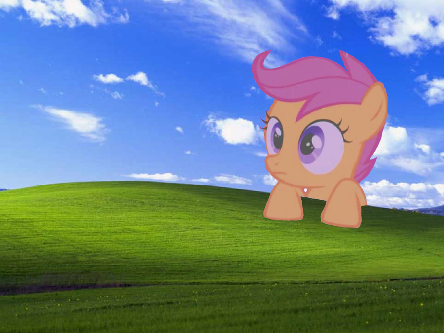 scootaloo windows xp wallpaper by augustthehedgehog on