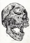 Skull - study