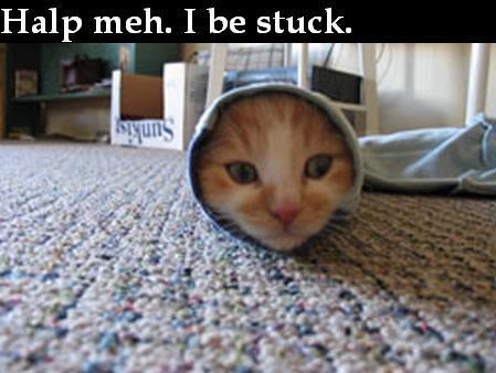 Funny Cat by NinjagirlSai
