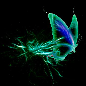 Butterfly by BuddahFrog