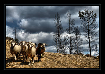 We need a Shepherd by MewSa