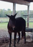 Deirdre the Mule by ariastrife
