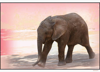 Baby elephant by misscroft