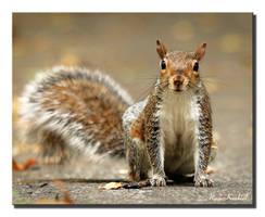 Squirrel by AlinaKurbiel
