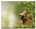 Raining Again by AlinaKurbiel