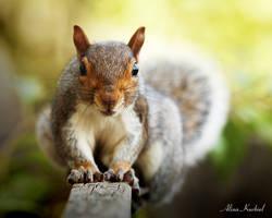 Eastern Gray Squirrel by AlinaKurbiel