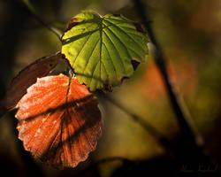 October Colors by AlinaKurbiel