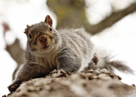 The Squirrel by AlinaKurbiel