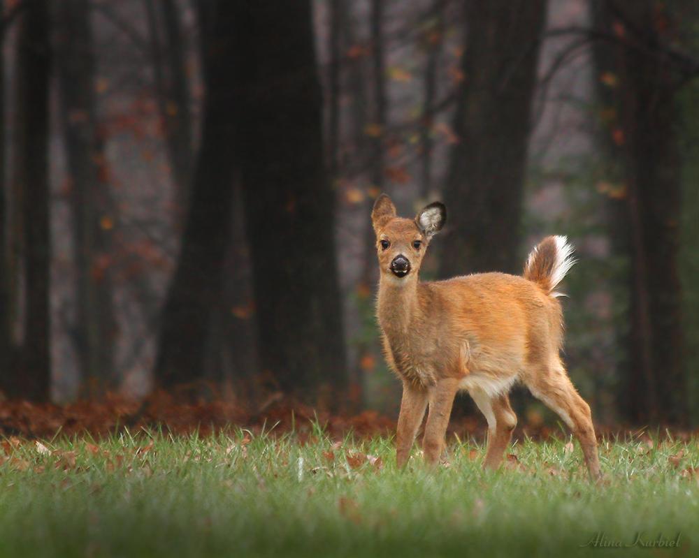Bambi by AlinaKurbiel