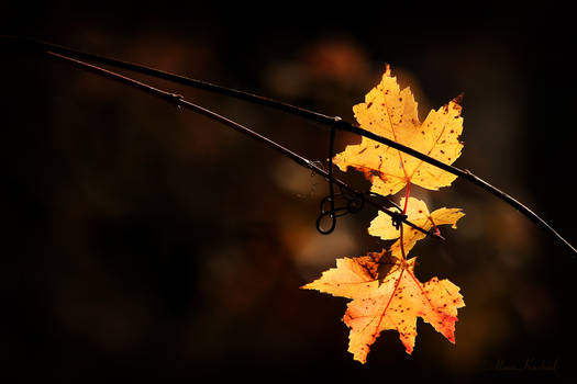 A Farewell To Autumn