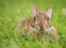 Little Rabbit by AlinaKurbiel