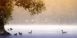 Foggy Morning by AlinaKurbiel