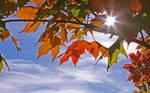 Fall Colors by AlinaKurbiel