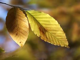 Autumn Leaves by AlinaKurbiel