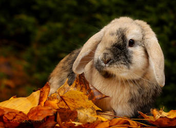 Autumn Bunny by AlinaKurbiel