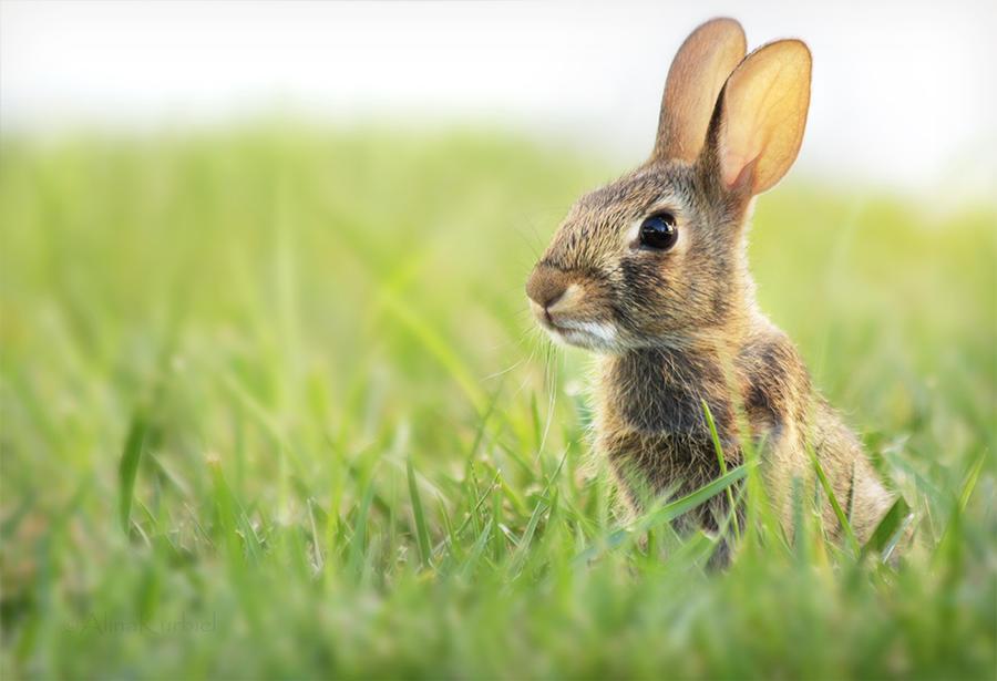 Little Bunny by AlinaKurbiel