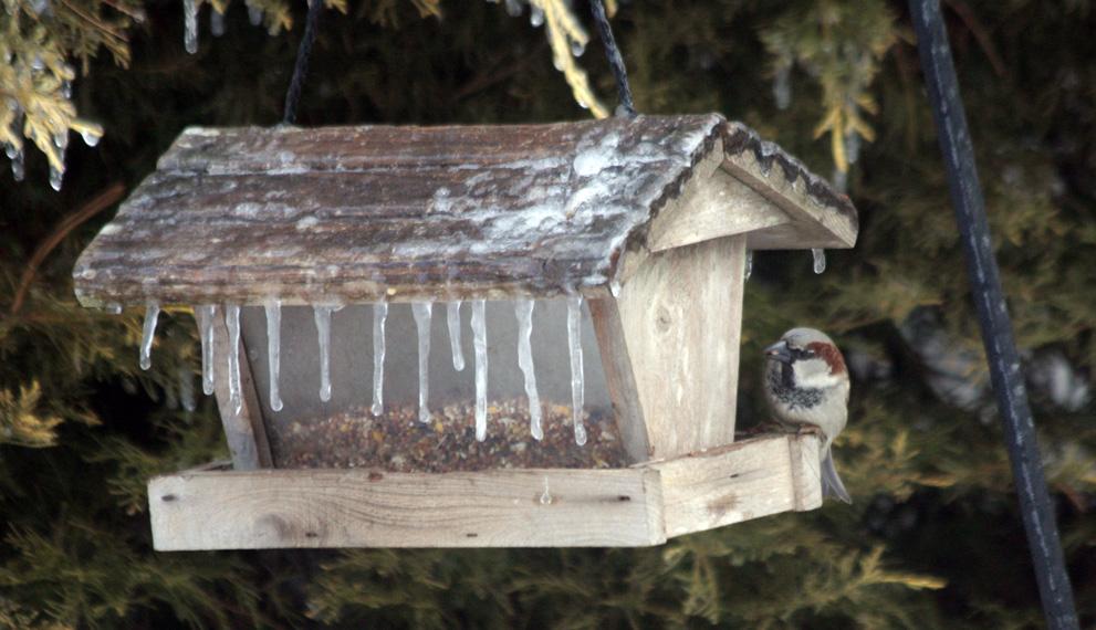 Hungry Bird by AlinaKurbiel