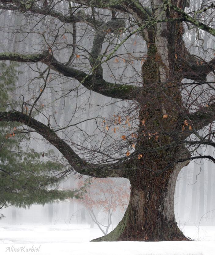 Old Tree by AlinaKurbiel