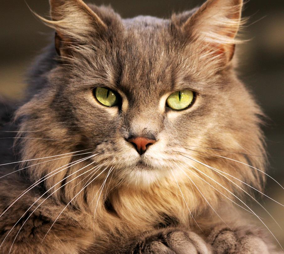 My cat by AlinaKurbiel