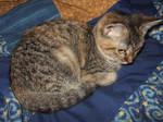 My Cat Freyja