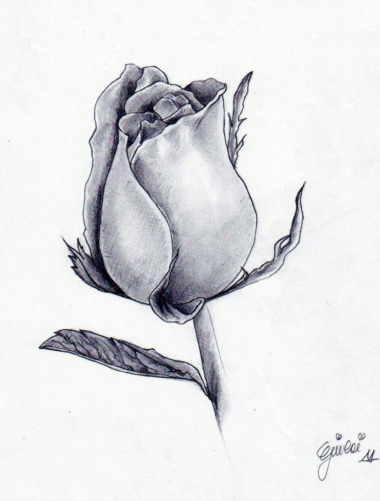 Realistic Black And White Rose Drawing
