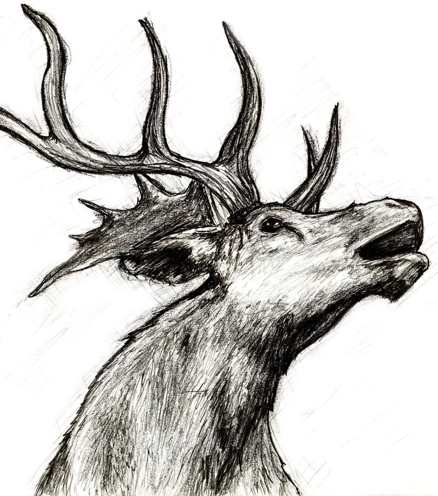 Magnificent Elk Head Coloring Pages Frieze - Examples Professional ...