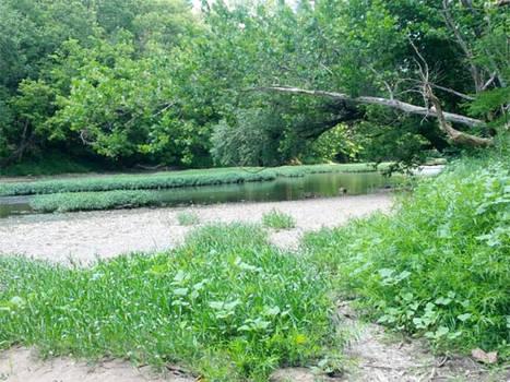 More River Greenery