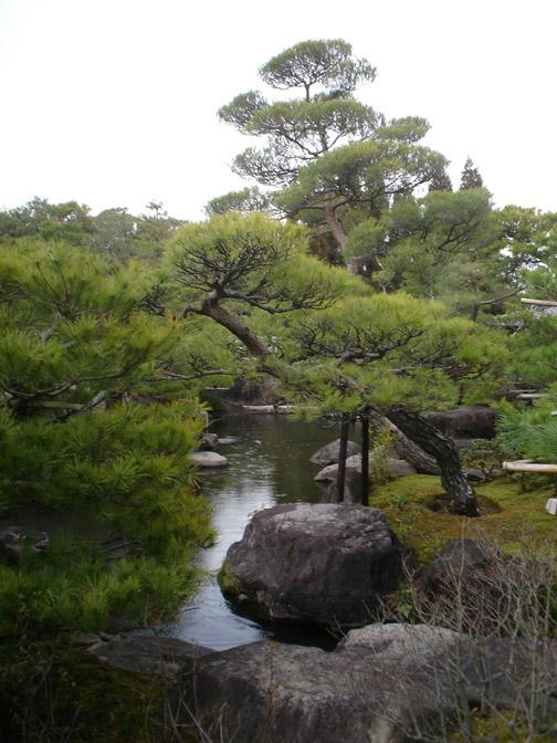 Pine Forest by Atressa