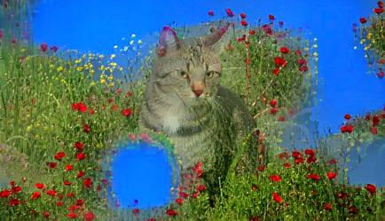 Cat with poppy's