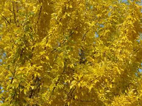 Yellow joy
