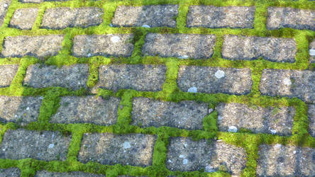 Stock Texture- Street stones covered with moss