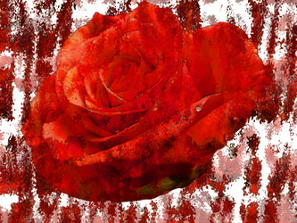 Stock, A rose with transparant background