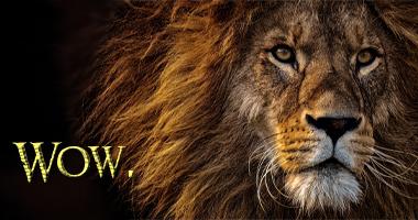 Wow Lion