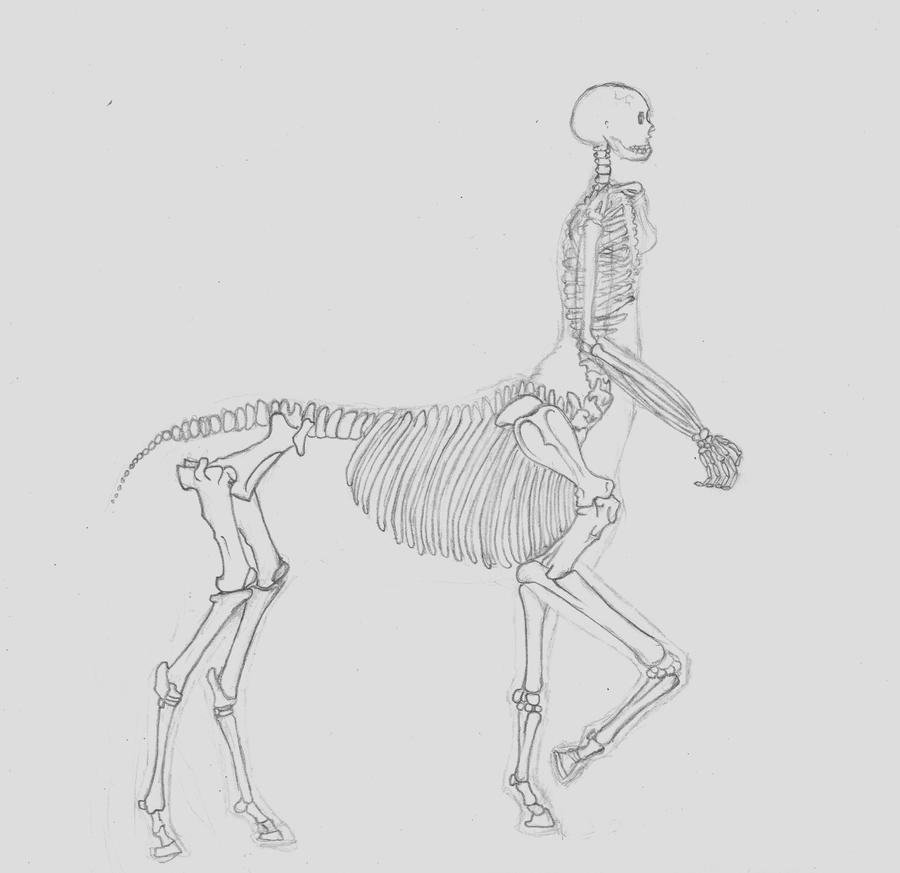 how to draw skeletal structures