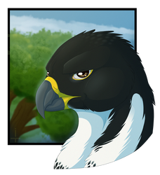 experimental headshot: Tiercel by TheInexcusable