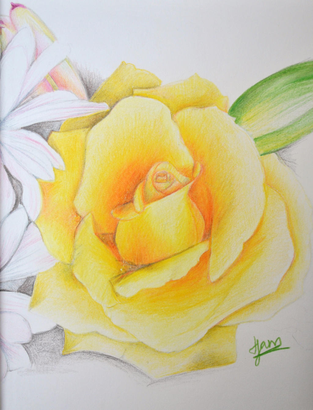 Yellow Rose by Jam1992